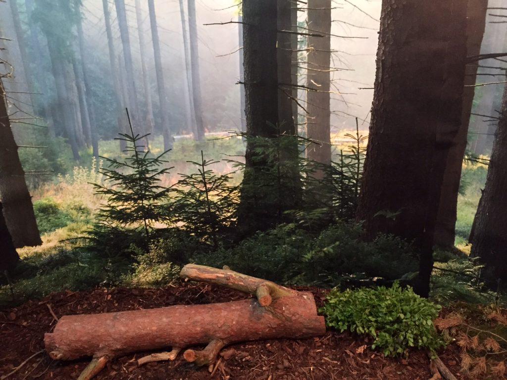 dra åt skogen